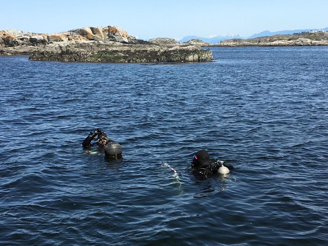 Bull Kelp Monitoring 2
