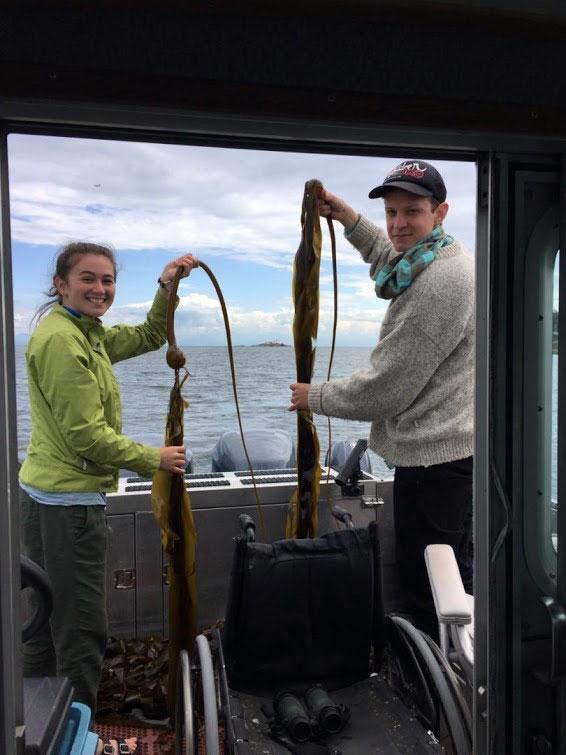 Bull Kelp Sampling 3
