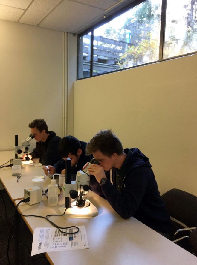 Forage Fish Spawning Habitat Monitoring 3