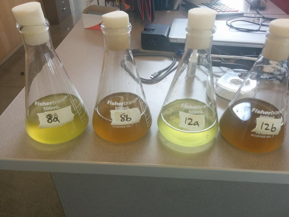 Algae In A Bottle Experiment