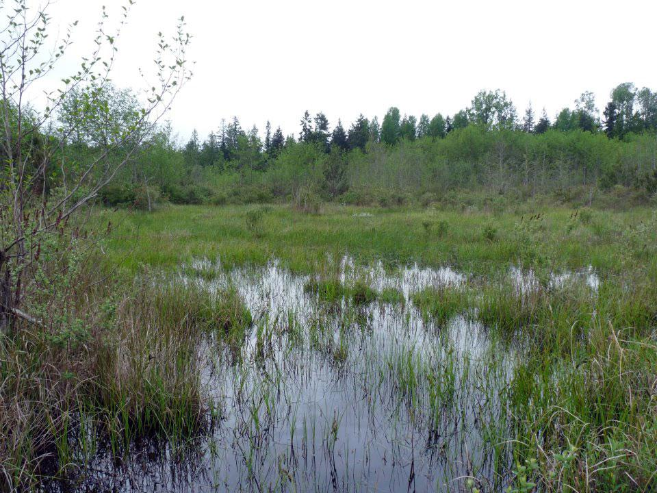 Mapping Parksville's Wetlands 6