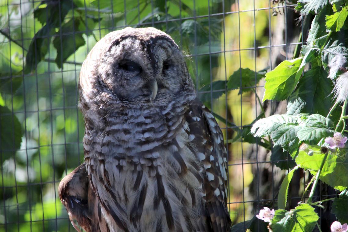 North Island Wildlife Recovery Center 3