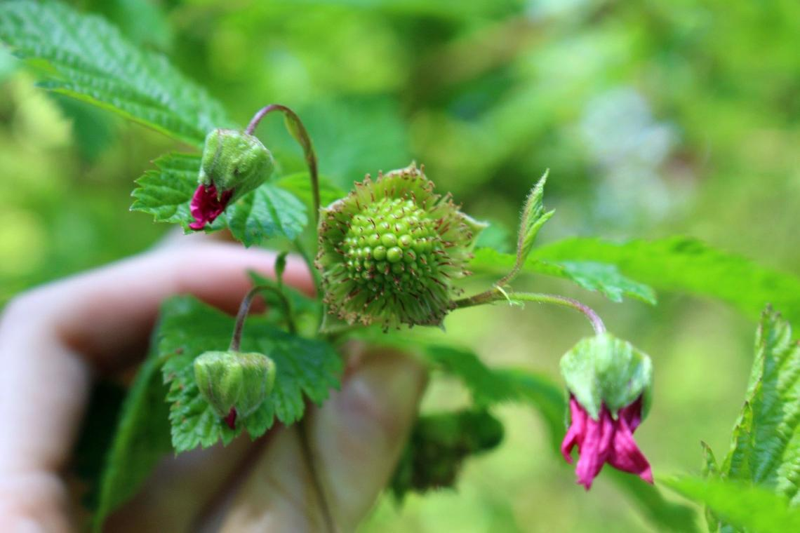 Plant Phenology 2