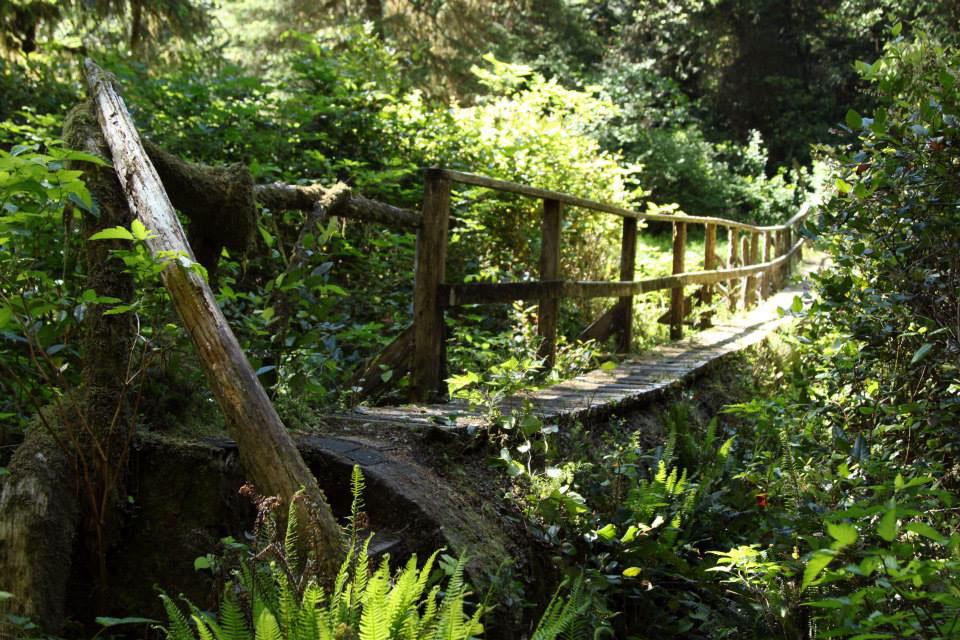 Walking the Wild Side in the Clayoquot Sound Biosphere Reserve 12