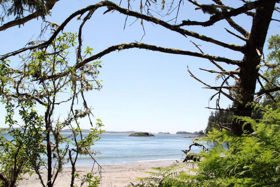 Walking the Wild Side in the Clayoquot Sound Biosphere Reserve 6