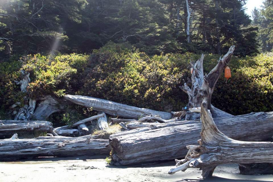 Walking the Wild Side in the Clayoquot Sound Biosphere Reserve 8