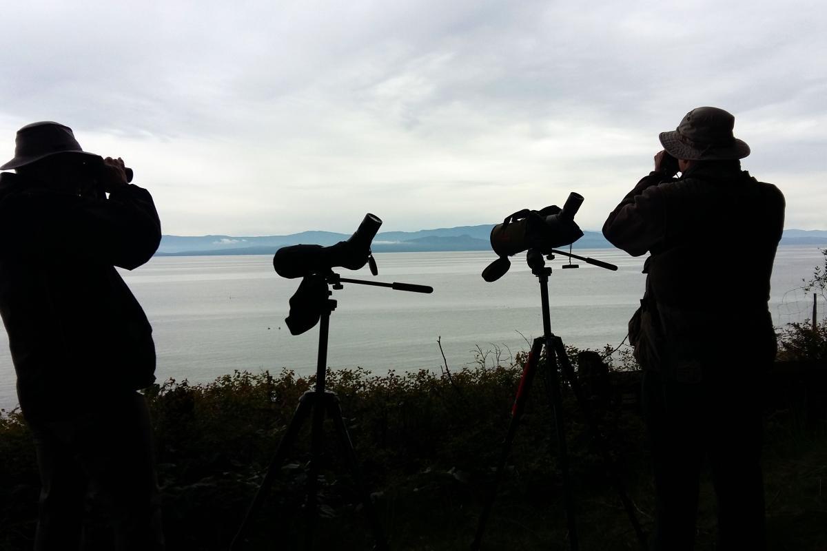 Birding at Milner Gardens & Woodland.