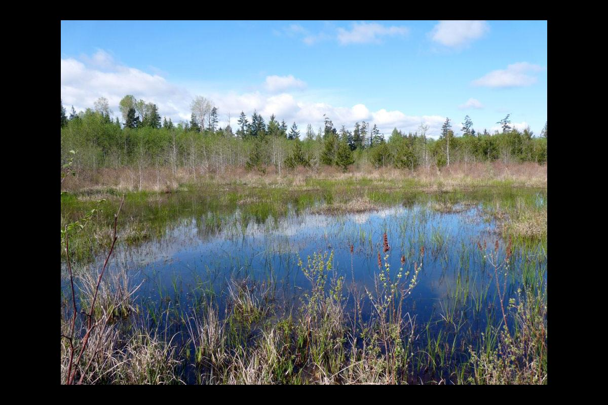 Mapping Parksville's Wetlands 1