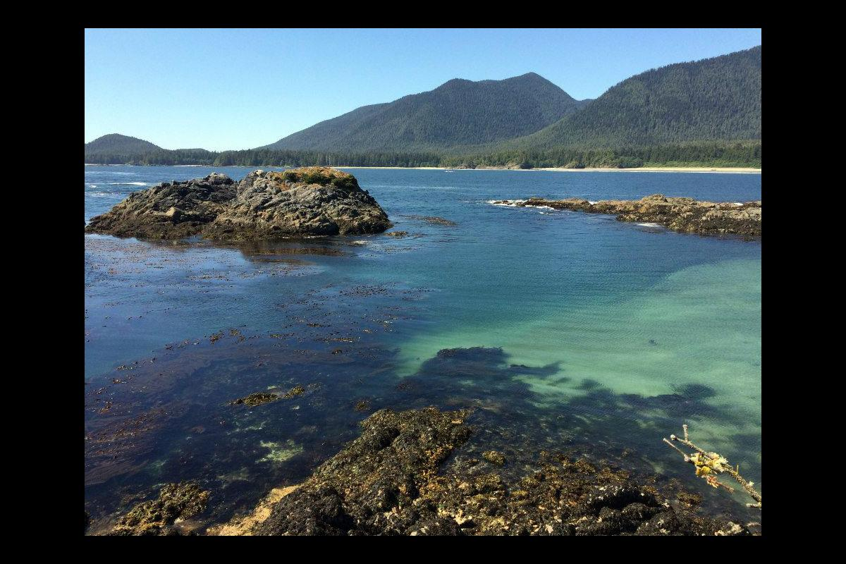 Walking the Wild Side in the Clayoquot Sound Biosphere Reserve 1
