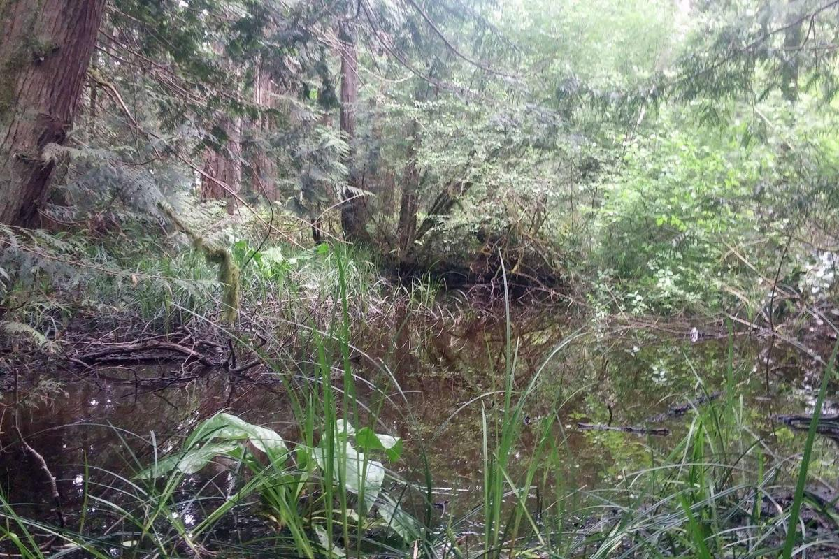 Wetland Mapping