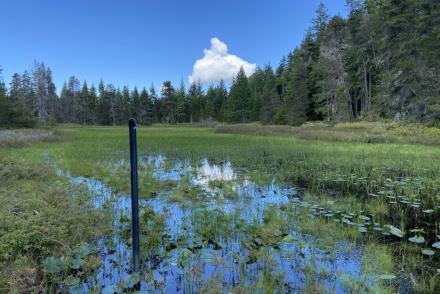 MABR_Wetlands