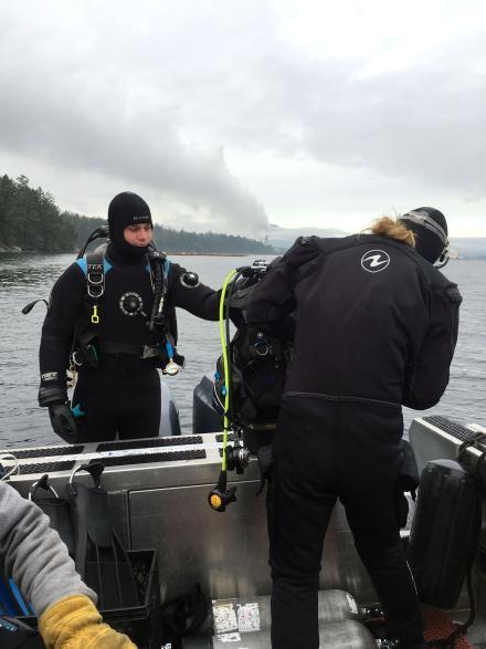 A New Season for Bull Kelp 1